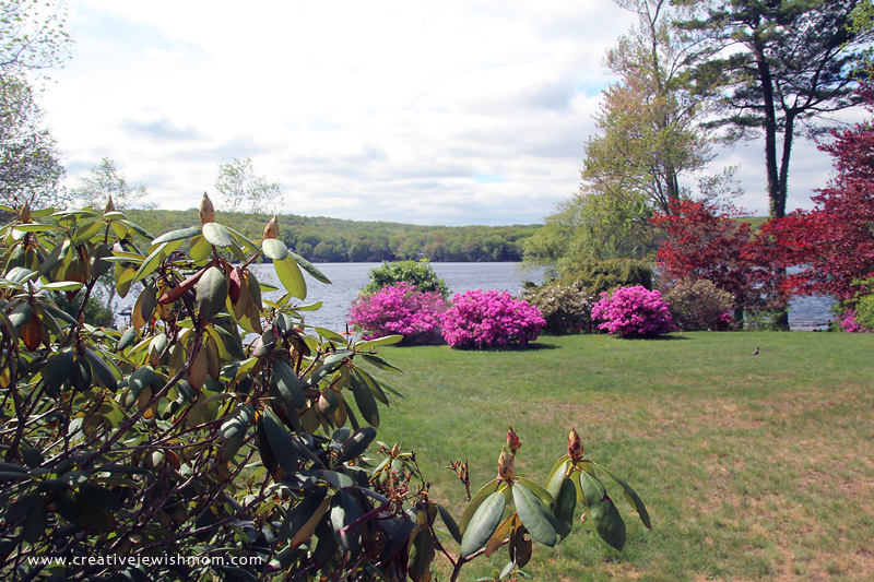 Connecticut Lake Flowering Bushes With Lake