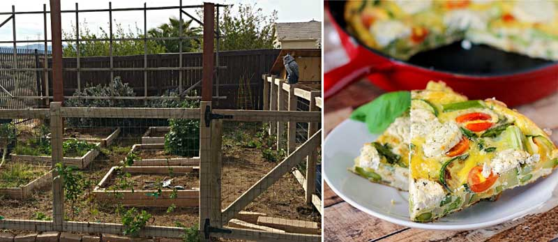 Goat cheese fritata,raised garden bed how to