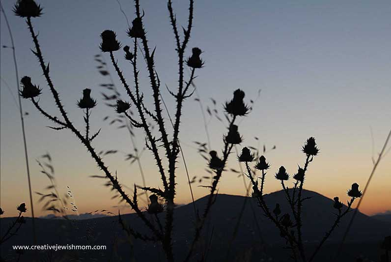 Silhouette Park Thistles And Mount Meron