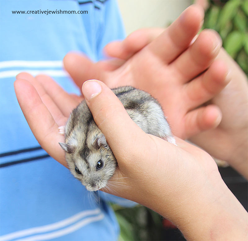 Hamster As Pet That Escaped