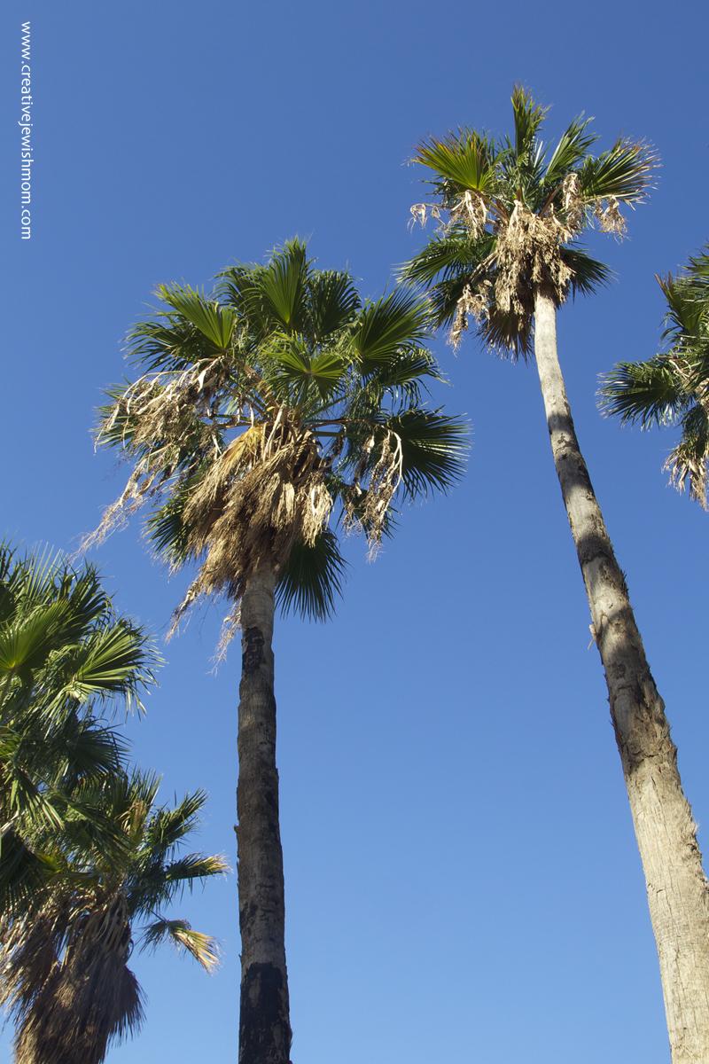 Tiberius Lake Date Palms
