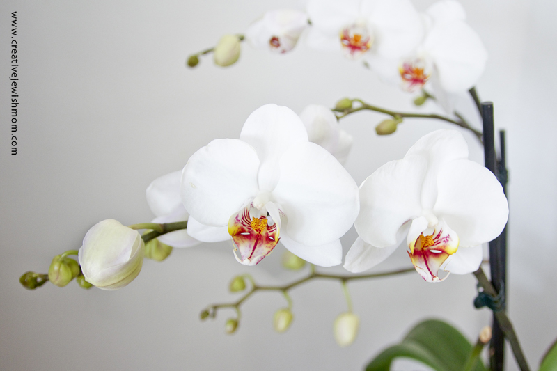Getting Your Orchid To Rebloom Up Close And In Person Creative