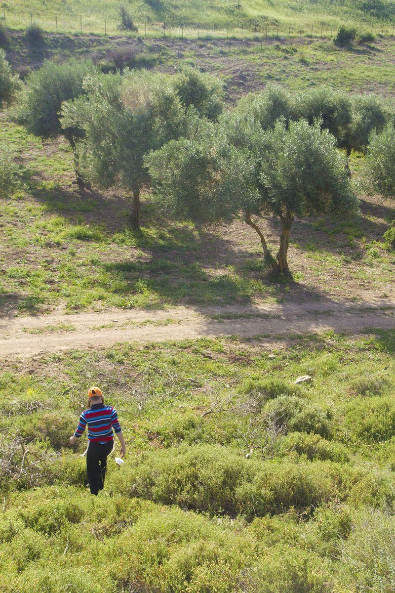 The Idra Adjacent Olive Grove