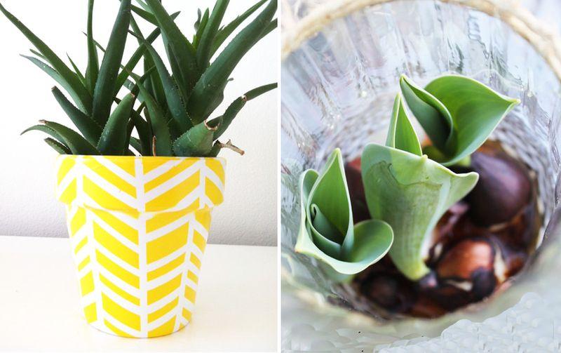 Herringbone pattern planter,tips for forcing bulbs