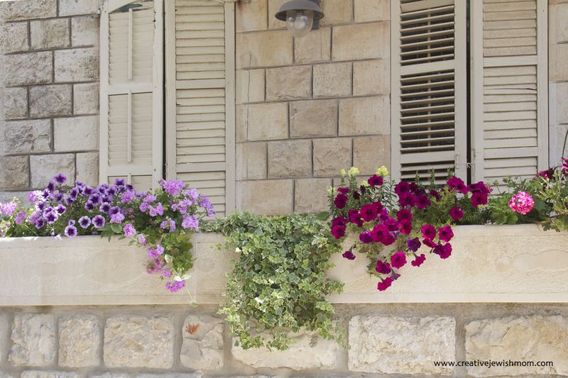 Windowbox flower ideas