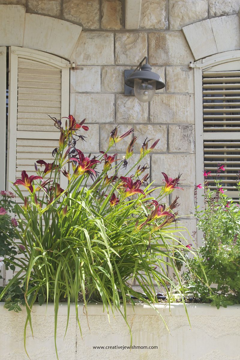 Window box gardening with lillies