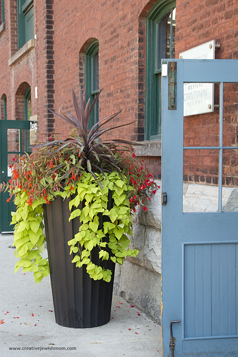 Toronto Container gardening One great high container