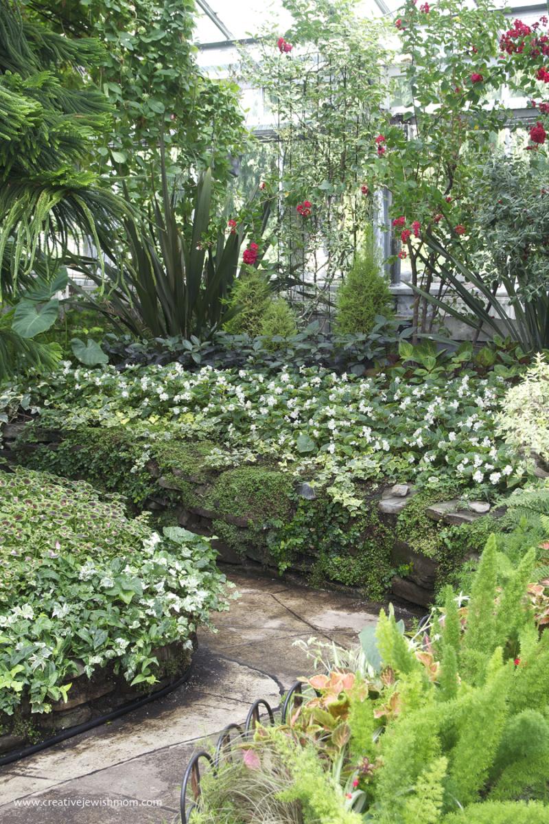 Allan Gardens  Foxtail fern