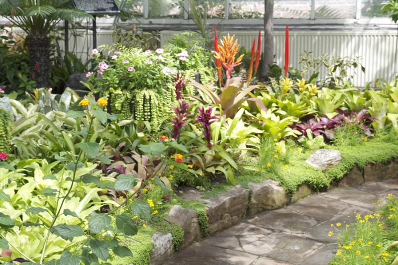 Allan Gardens Bromeliad Garden