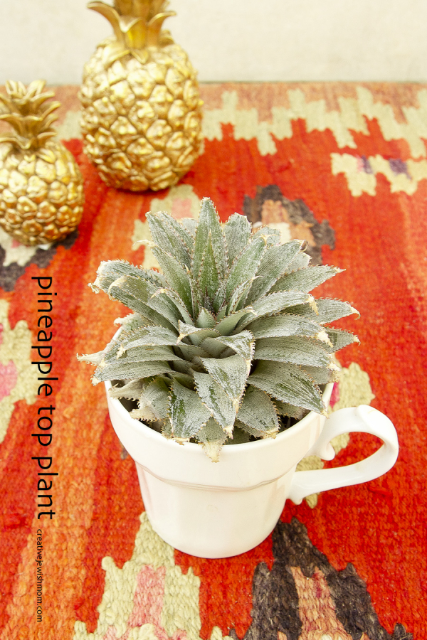 Grow A Beautiful Pineapple Houseplant From A Pineapple Top