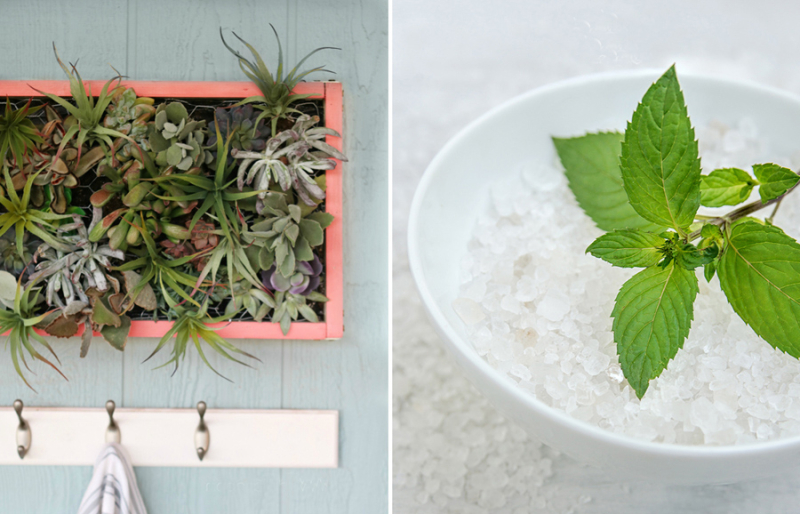 DIY succulent wall box peppermint foot scrub
