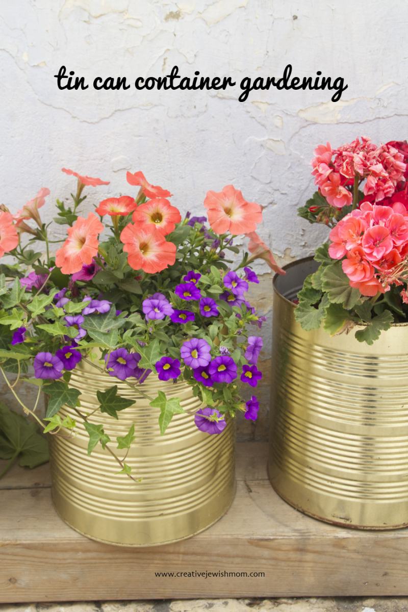 Tin can container gardening with petunias