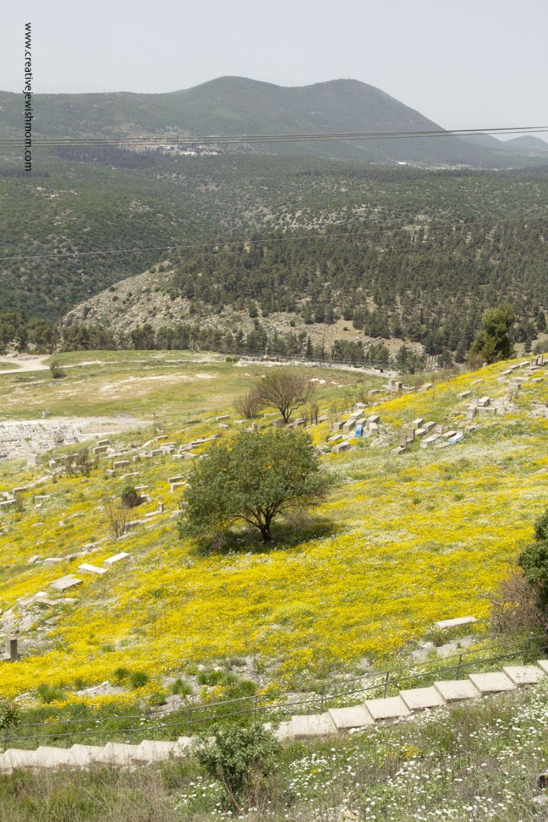 Old cemetary Safed Israel with yellow wild flowers