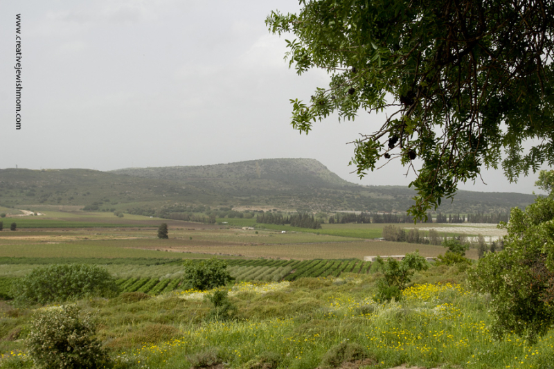 Tel Kedesh view of fields and mountain