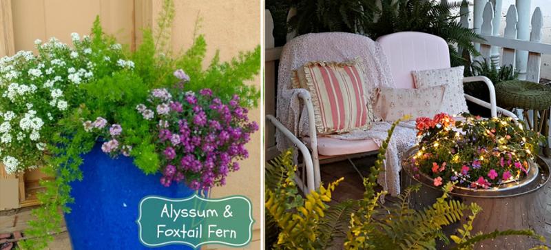Washing machine drum coffe tabke  alyssum and foxtail fern planter
