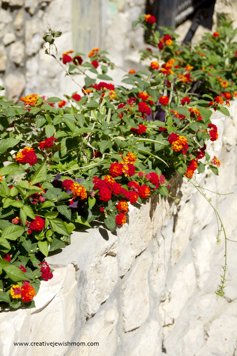 Lantana Small Red In Top of wall planter