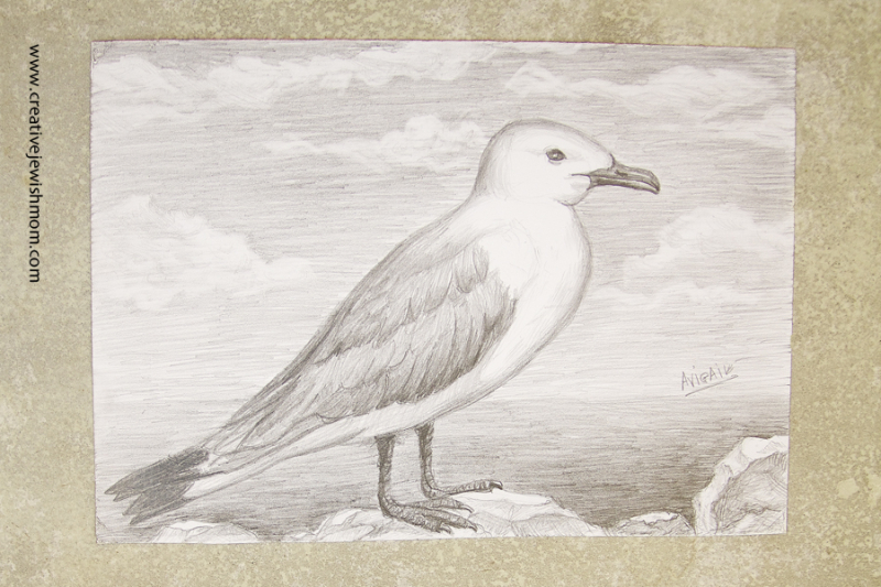 Pencil Drawing Sea Gull exercise