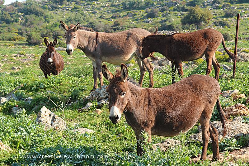 Israel Vacation Dalton Donkies