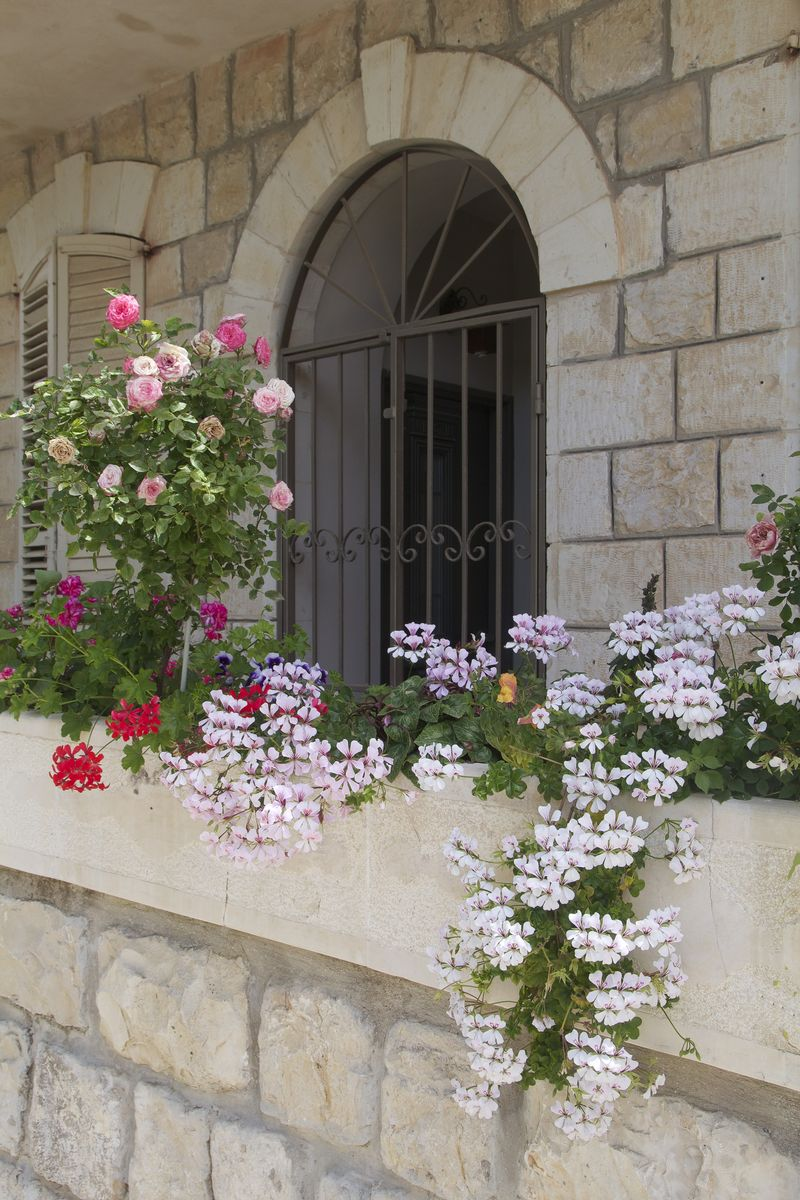 Window box garden with rose standard