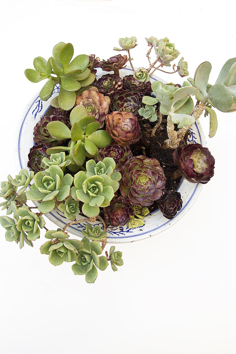 Succulent mixed pot