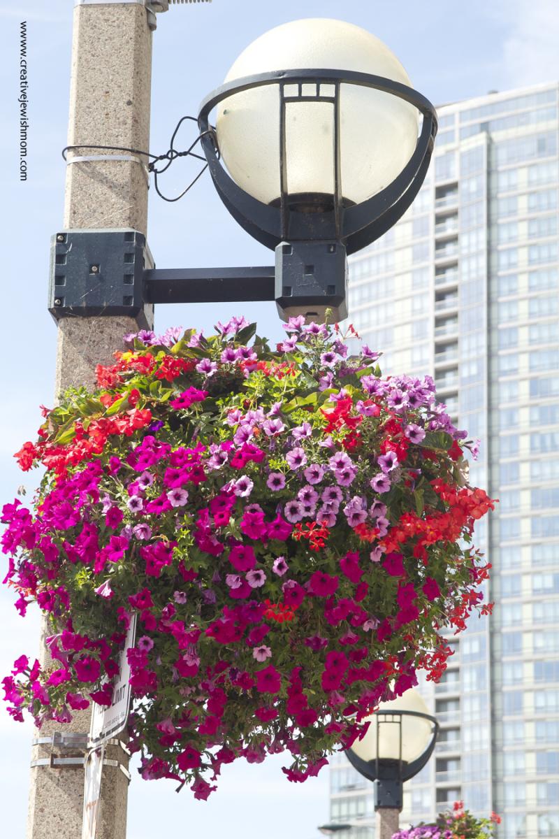 Toronto Flowers In Summer