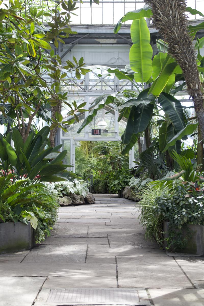Allan Gardens Inside