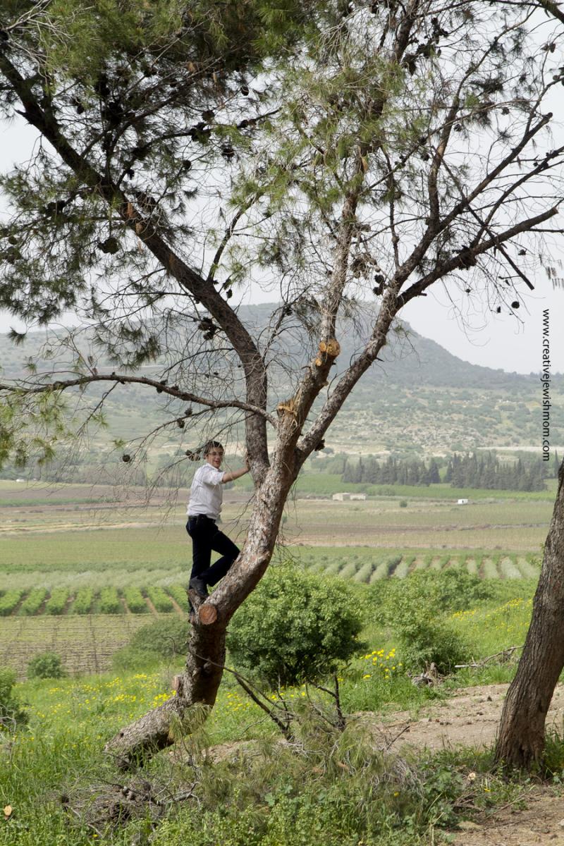 Tel Kedesh Israel Boy climbing tree