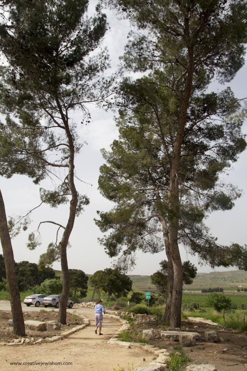 Kadesh Israel Tall Trees on Path
