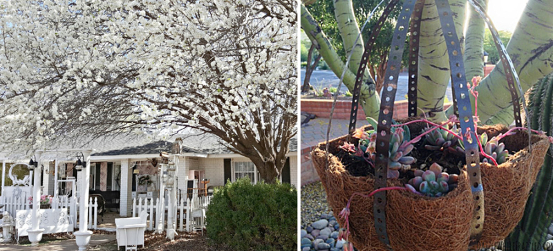 Metal-strip-hanging-planter pear-tree-in-bloom