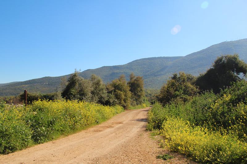 Bircat HaElanot Into The Fields passover Israel