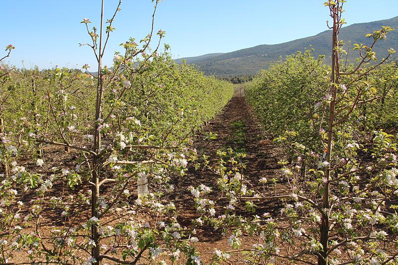 Bircat HaElanot Fruit Trees Israel