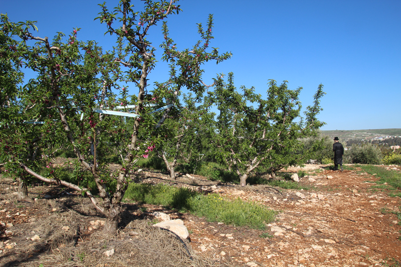 Bircat HaElanot Fruit Trees Israel orchard