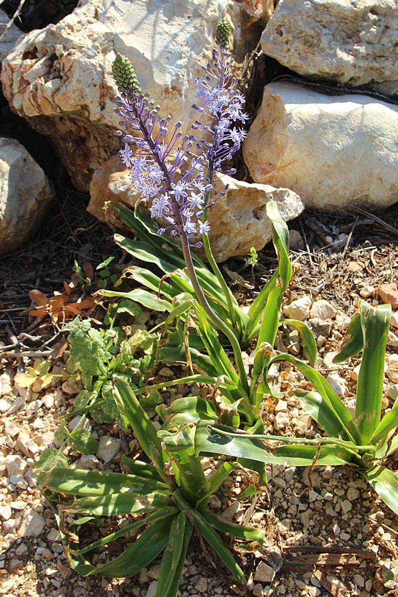 Bircat HaElanot israel Wildflower