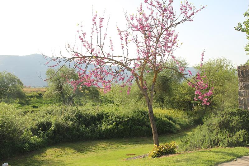 Jordan River Bank park red bush tree