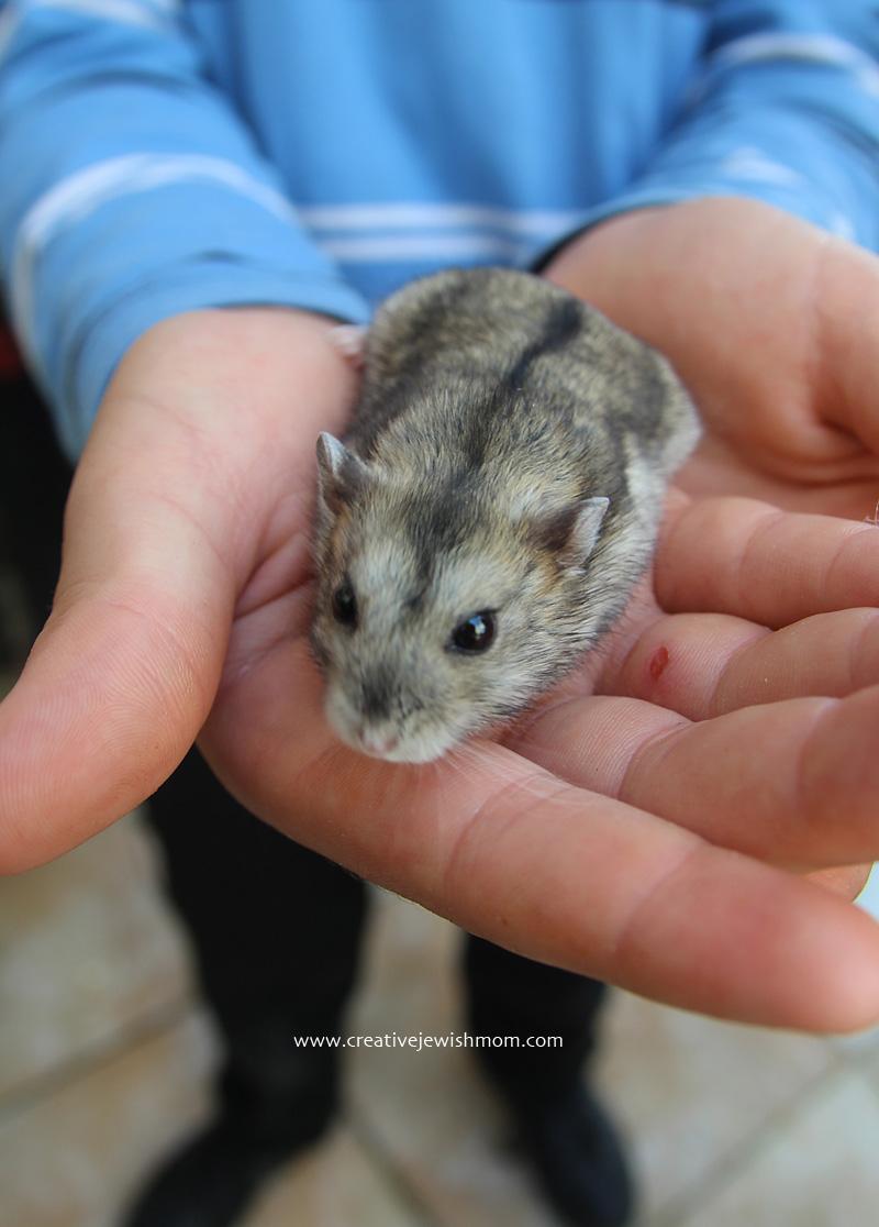 Hamster rescued