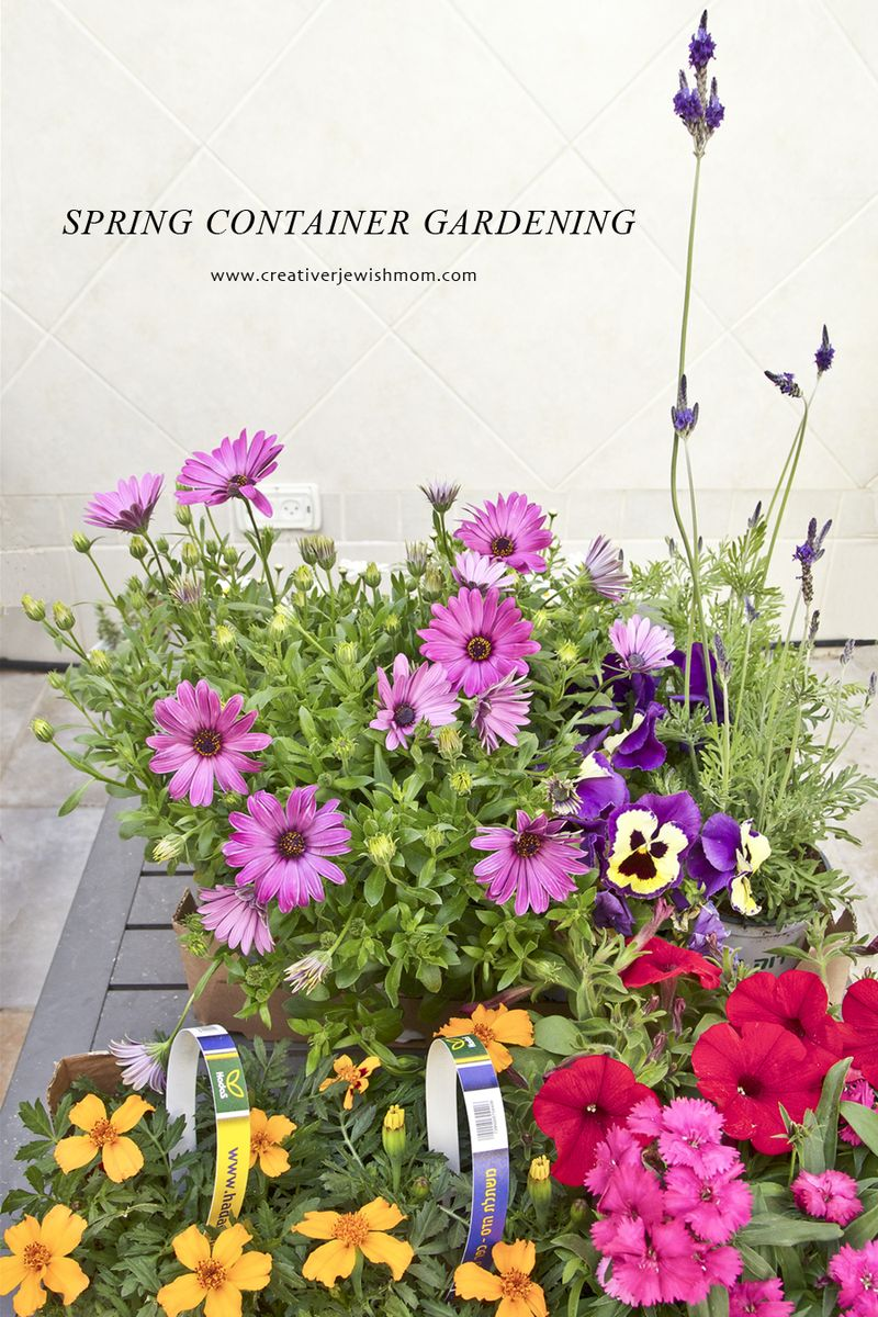 Spring Flowers For Container garden