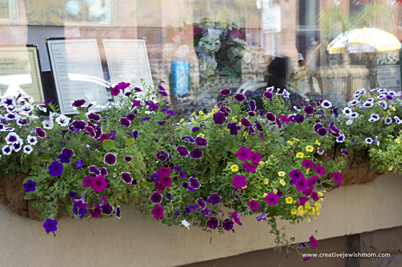 Toronto Containers Many colors of petunias