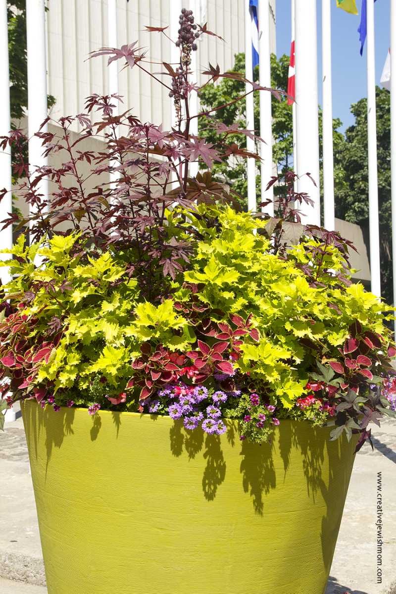 Toronto Container With Vivid Leaves