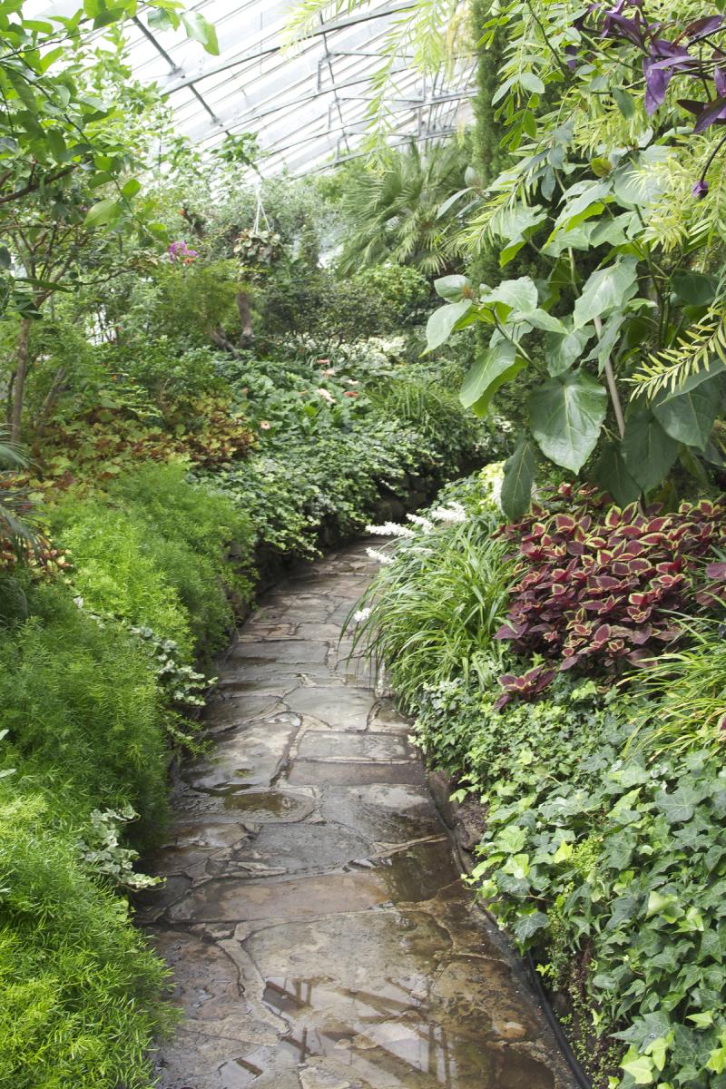 Allan Gardens coleus