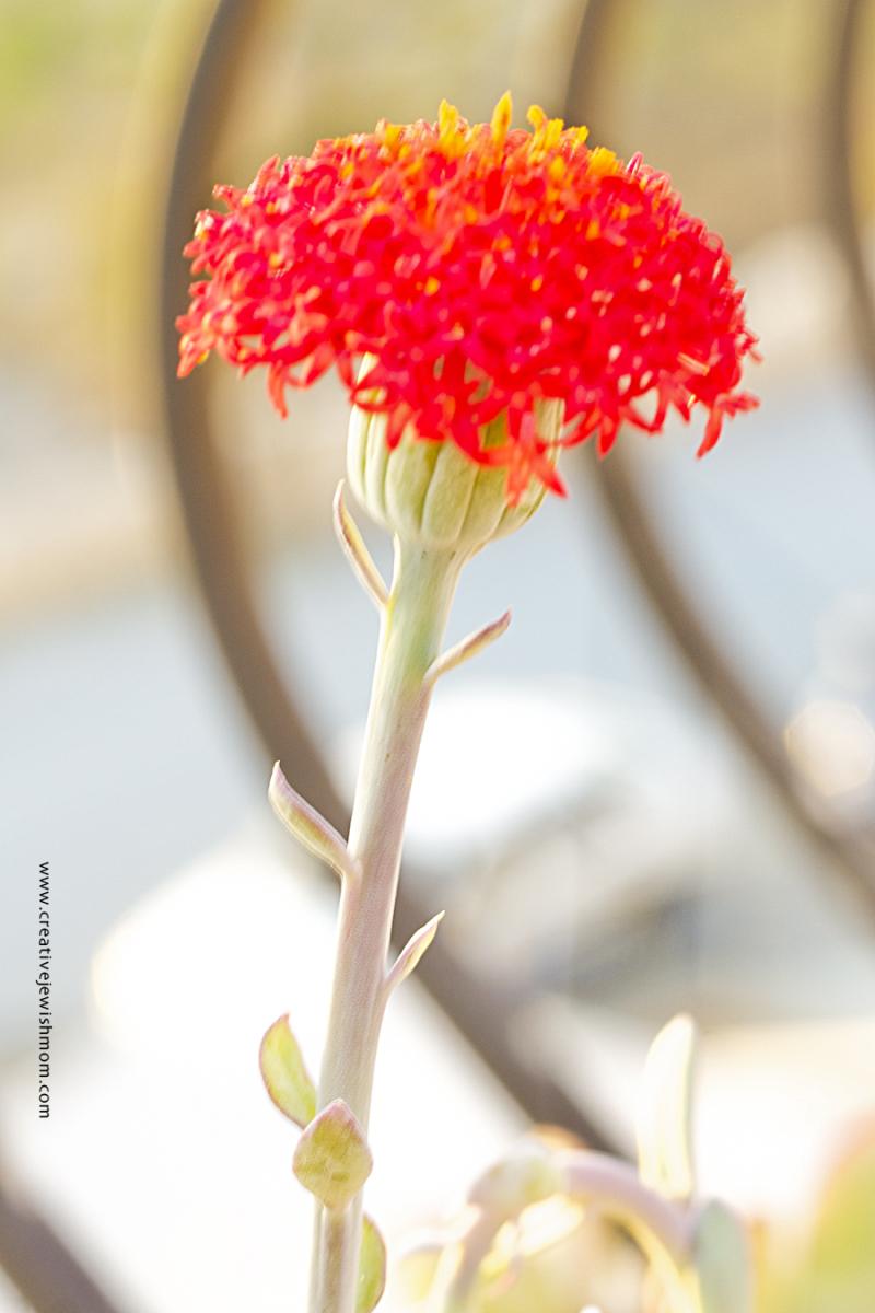 Oribe Gorge Flower Close Up