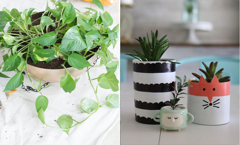 How to create drainage without holes,cereal box succulent planter