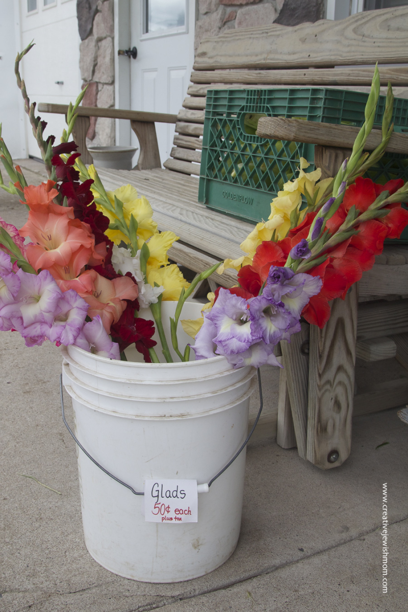 Croghan NY Gladiolas For 50 cents