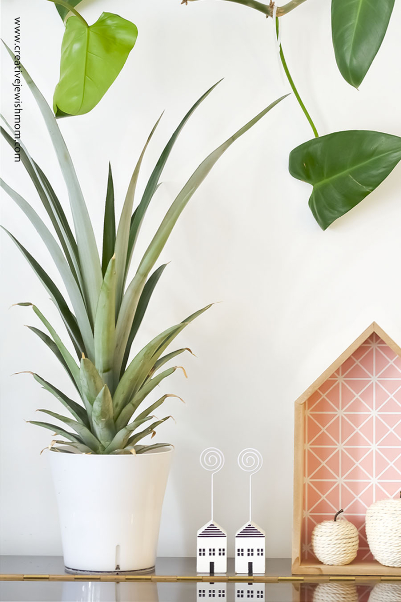Pineapple Plant Simple DIY From Pineapple Top