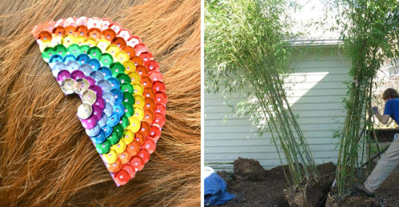 Best bamboo to plant rainbow sequin hair clip
