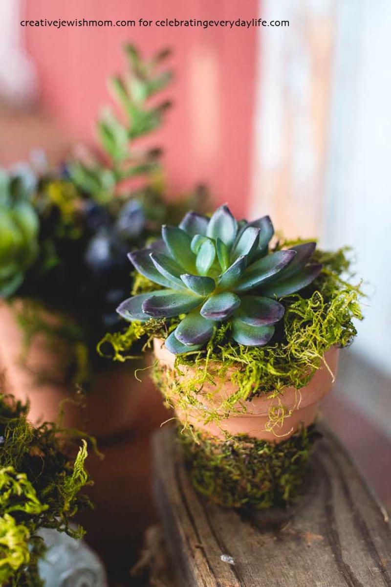 Diy-faux-succulent-arrangement