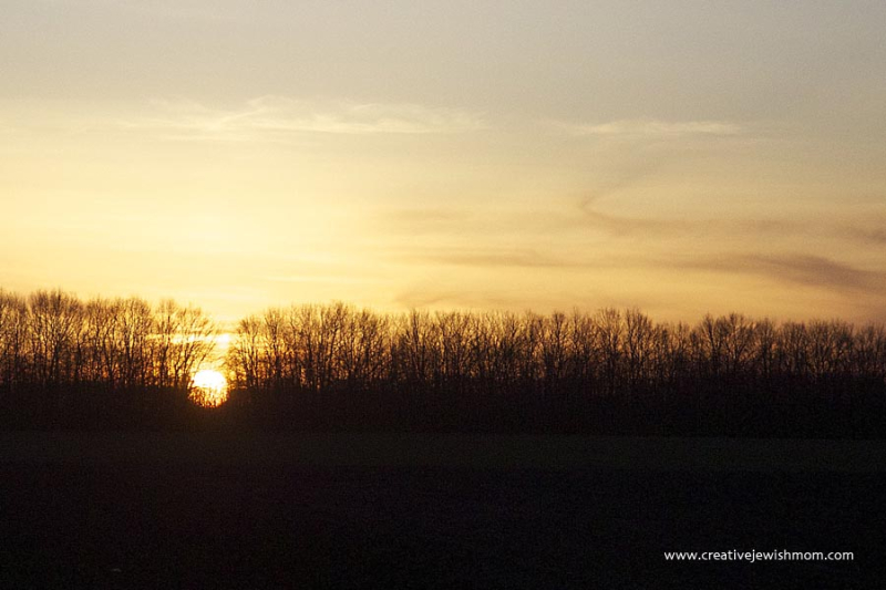 Bare Trees with sun going down Ukraine