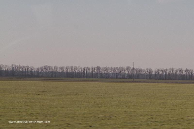 Bare trees and grass Ukraine