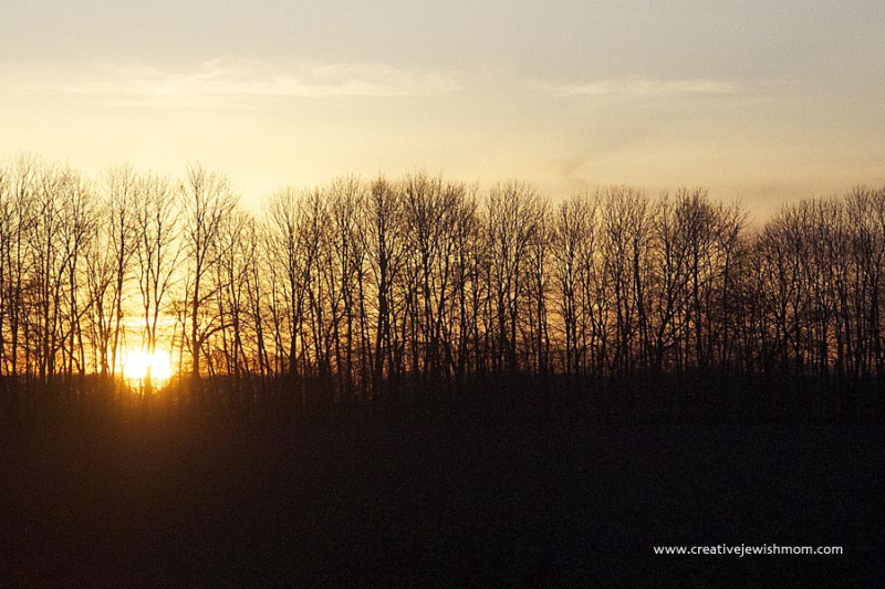 Bare Trees With Sun Going Down Behind Silhouettes
