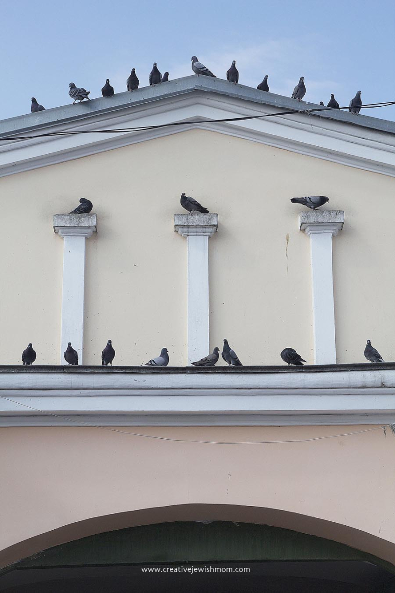 Uman Ukraine Market Building With Pigeons