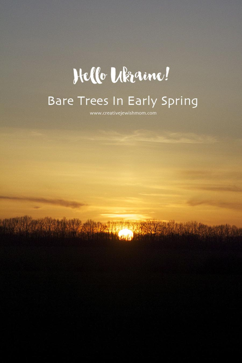 Bare Trees with sun going down